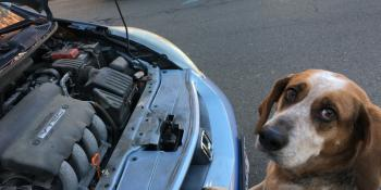 Keep dogs away from antifreeze